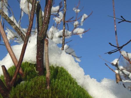 Beautiful snow on the moss Stock Photo