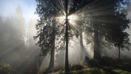 Sunrays on Foggy Morning Stock Photo