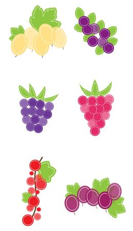 berry fruit: Six illustrations of berry fruit