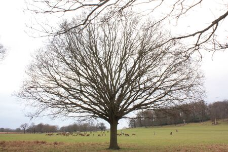 Empty branch tree and green grass