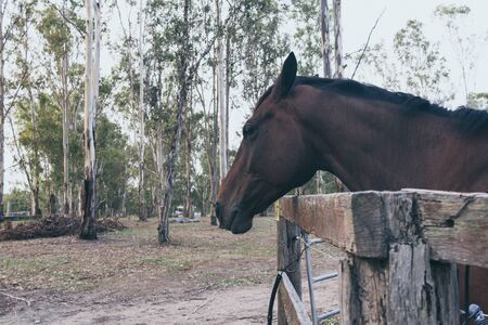 Brown horse on wild ranch. Spanish horse, andalusian