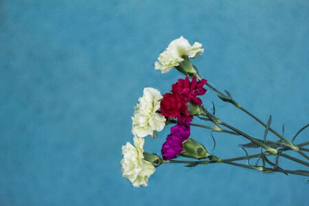 carnation pedal floating in water