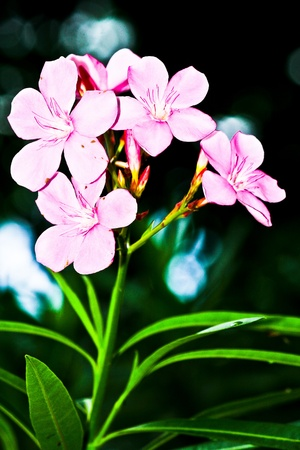 pink flower in green graden photo