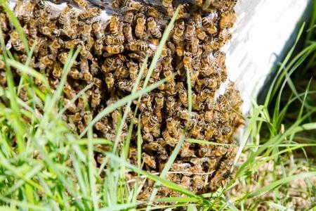 Abeilles sur l'extérieur de la ruche Banque d'images - 25064063