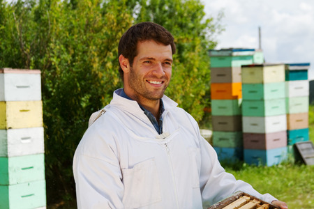 Beekeeper moving honeycomb frames Stock Photo