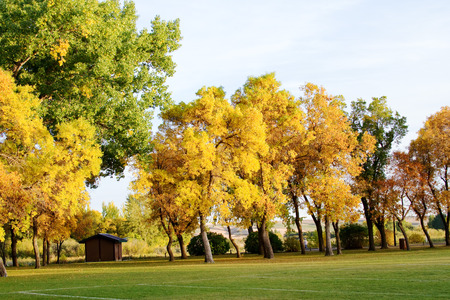 yellows: Colorful trees in yellows and oranges