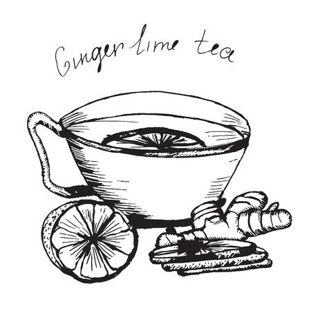 tazza di th�: Tiraggio della mano disegno vettoriale. Illustrazione tazza di t� con lime e zenzero. disegno a matita.