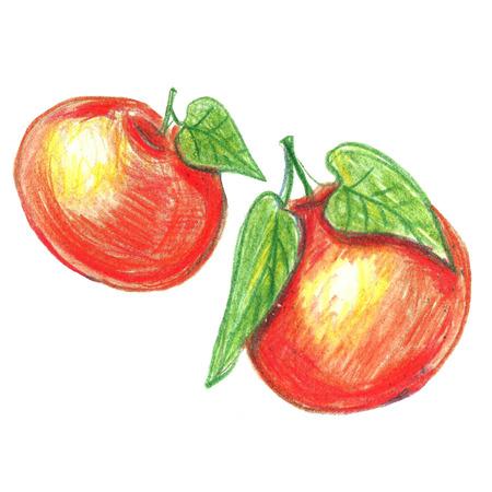 mandarins: Watercolor pencils mandarine orange fruit with leaves  isolated on white . Orange citrus tree.  Tangerine with leaves. Hand painted illustration. Stock Photo