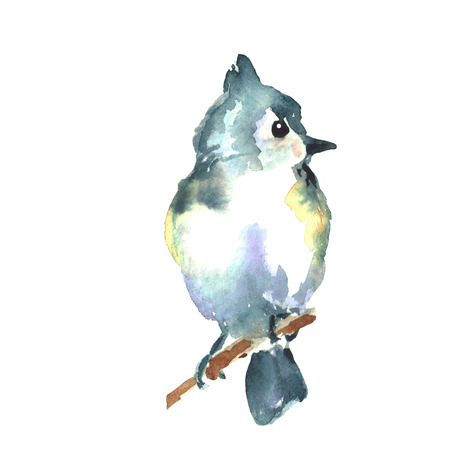 Watercolor illustration. Big blue tit bird. Wild birds of Europe and North America.
