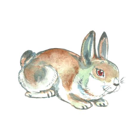 Watercolor illustration. Hand painted hare. Wild animal.