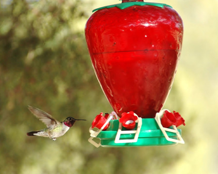 Ruby Throated Hummingbird Фото со стока - 47653658