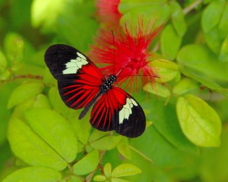 Butterfly on Red Flower Фото со стока - 50398877
