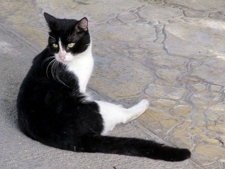 cat grooming: Cat