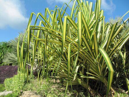 Tropical garden Stock Photo - 7432087