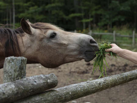 not open: Hand feeding horse