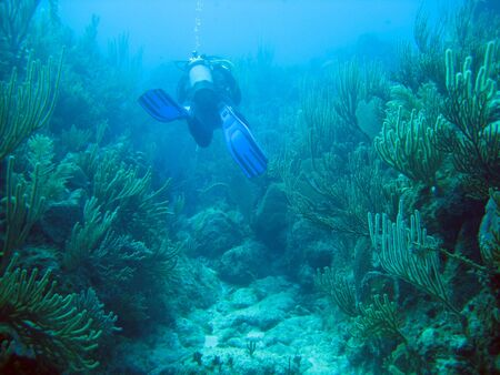 Diver swimming through the coral reef