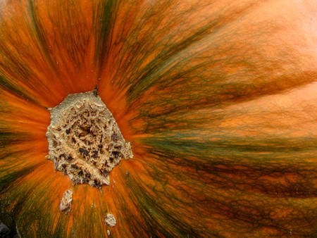Bottom of an orange pumpkin with green accents
