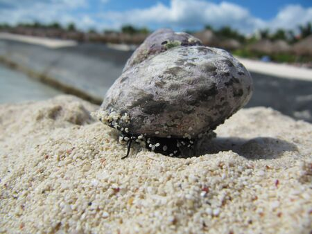 Snail on top of the sand dune