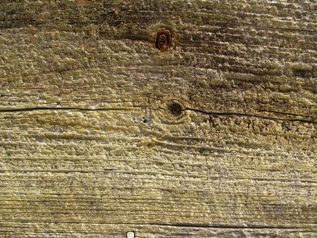 Wood panel Stock Photo - 16479822