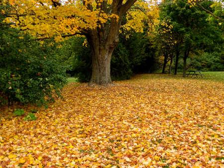 Autumn Stock Photo - 16881689