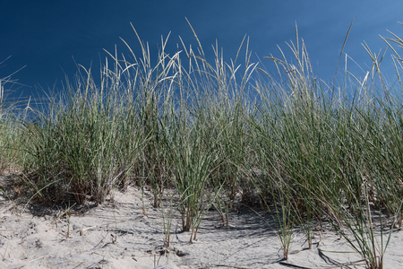 Long grass on a beach with blue sky background Stock Photo