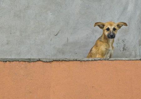 Dog waiting on the balcony