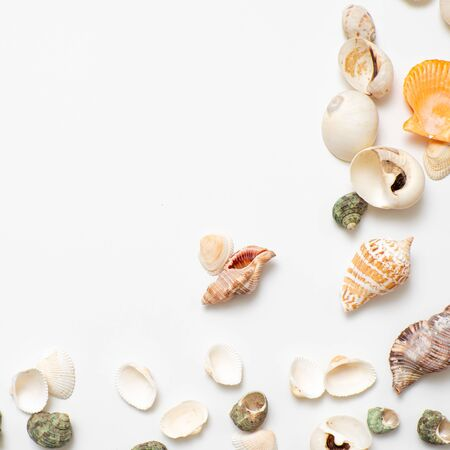Different seashells on a white background , the concept of holidays by the sea. Background and a frame made of shells on the side, copy space