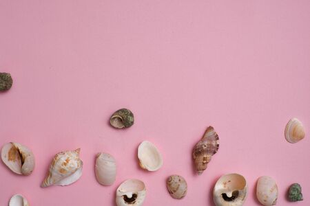 Different seashells on a bright pink background , the concept of holidays by the sea. Pink background and a frame made of shells on the side, copy space