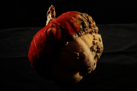 widely: pumpkins turban: widely cultivated in Central and South America, has large fruit with ribs of a red-orange.