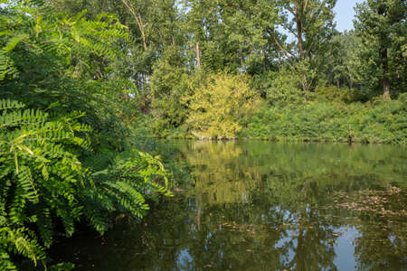 Inlets on the banks of the Po river in an environment of vegetation. Stock fotó