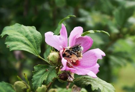 is covered: bee covered in pollen