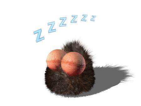 Wobby, the hairy cute, creature, is sleeping photo