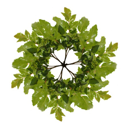 green wreath isolated on white photo