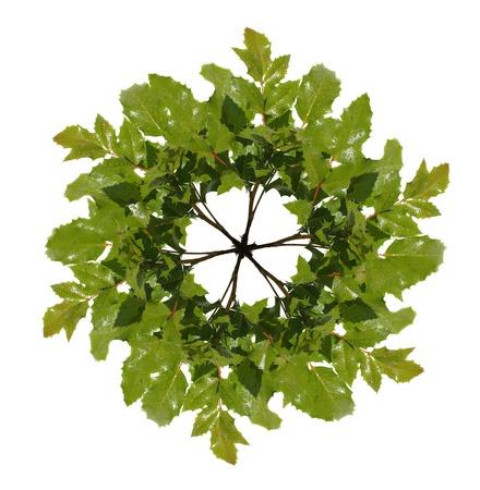 crocket: green wreath isolated on white Stock Photo