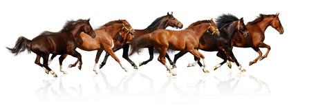 horse races: gallops reba�o - aislados en blanco