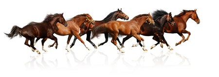horse race: herd gallops - isolated on white