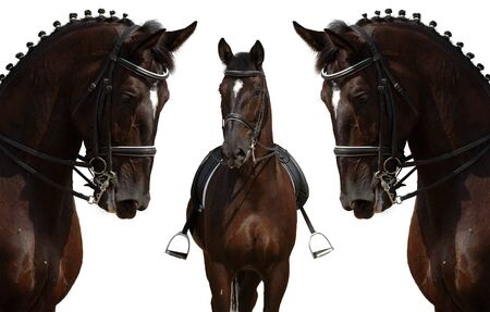 Dressage: head of horse isolated on white photo