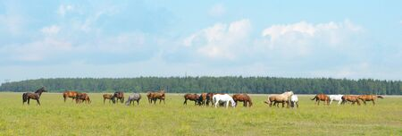 small horse herd in a field