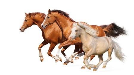 Galop trois chevaux - isol� sur fond blanc