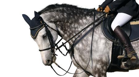 dapple grey: Dressage: head of dapple-grey horse isolated on white