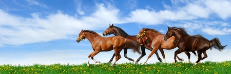 horse race: herd gallops in green field