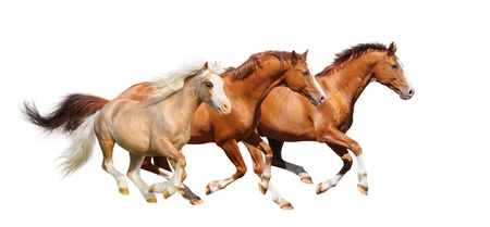 Three horses gallop - isolated on white