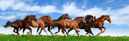 herd gallops in green field 版權商用圖片 - 9912976