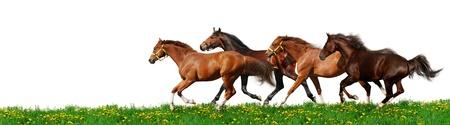 carreras de caballos: gallops reba�o - aislados en blanco