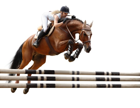 cavallo che salta: show jumping (stylized by oil painting) - isolated on white