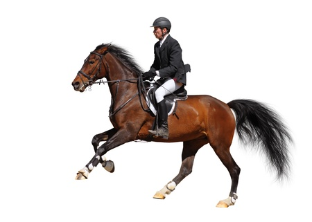 A rider in a show jumping running at full speed - isolated on white Stockfoto