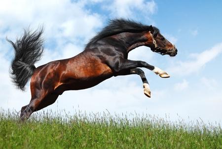 arabian stallion jumps - realistic photomontage  Banque d'images
