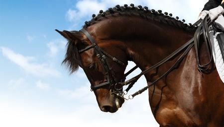 dressage - equestrian sport 스톡 콘텐츠