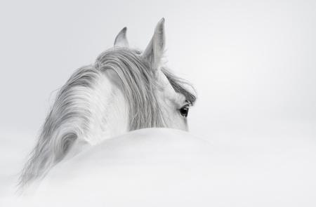 cabeza de caballo: Caballo andaluz gris en una niebla