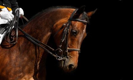 dressuur, bruin paard - geïsoleerd op zwart